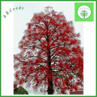 Retail Australian Native Tree Seed Shop