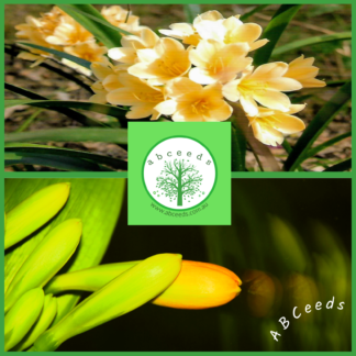 Retail Flowering Plant Seed Shop