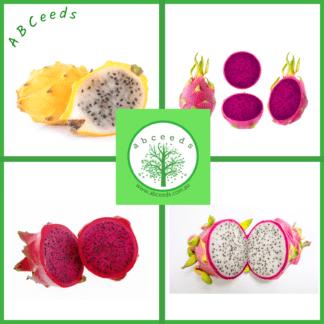 Retail Edible Seed Shop